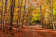 Sunny forest covered with yellow foliage