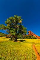 Red sandstone formations, Willow Creek Trail, Roxborough State Park, near Littleton, Colorado USA.