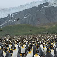 Gold Harbor, South Georgia, Antarctica.