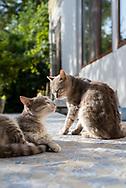 Two cats enjoy the morning sun outside Saro's Guesthouse in Shushi, Nagorno-Karabakh.<br /><br />(September 23, 2016)