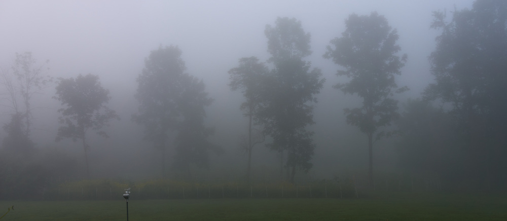 Foggy Morning Backyard View. Composite of two images taken with a Leica TL2 camera and 35 mm f/1.4 lens (ISO 100, 35 mm, f/4, 1/125 sec).