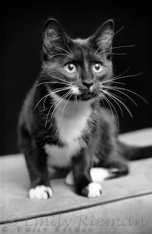 Portrait of a cat shot on black and white film.