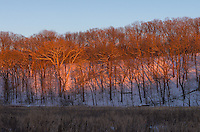 As the sun sank lower it cast a deep red glow on this snow covered ridge in Farmdale Recreation Area.<br /> <br /> Date Taken: January 12, 2015