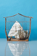 crumbled paper in a metal wire birdcage house