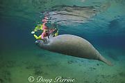 snorkeler and Florida manatee, Trichechus manatus latirostris, Three Sisters Spring, Crystal River National Wildlife Refuge, Crystal River, Florida MR 261