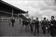 """26/06/1965<br /> 06/26/1965<br /> 26 June 1965<br /> Irish Sweeps Derby at the Curragh Race Course, Co. Kildare. Image shows """"Meadow Court"""" (L. Piggott up) jointly owned by Bing Crosby, Mrs Frank McMahon and Mr. G.M. Bell after winning the Irish Derby at the Curragh. Mr. """"Max"""" bell is leading the horse."""