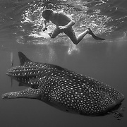Juvenile whale shark (Rhincodon typus) swimming below snorkeller, Honda Bay, Palawan, the Philppines