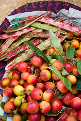 Harvested crab apples and borlotti beans in a basket. Malus