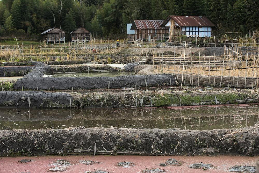 Apatani rice paddies<br /> Apatani Tribe<br /> Ziro Valley, Lower Subansiri District, Arunachal Pradesh<br /> North East India