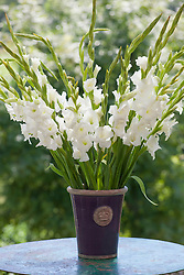 Gladiolus 'Bangladesh' in Kew vase