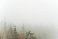 Autumn trees through the fog.  ©2014 Karen Bobotas Photographer