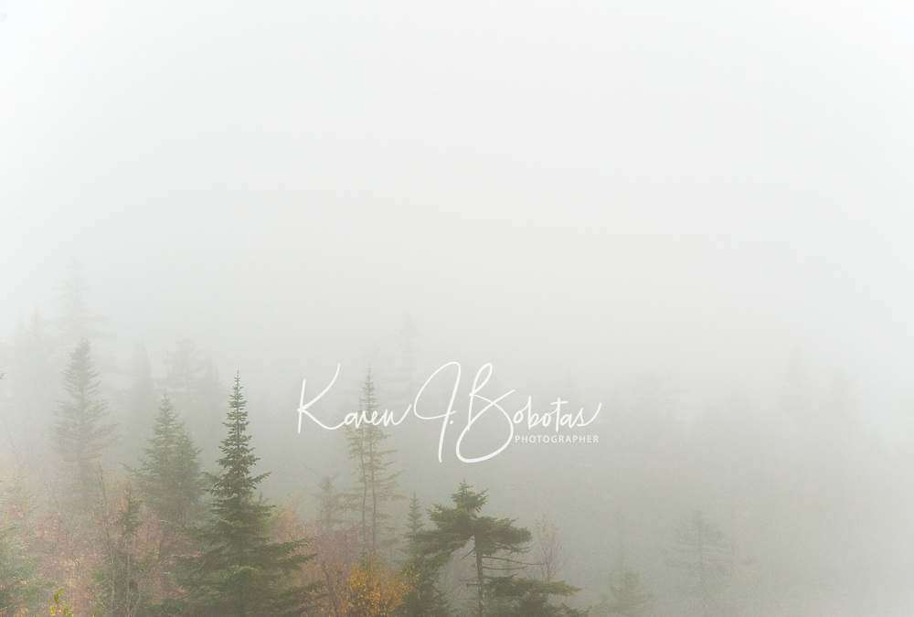 Autumn trees through the fog.  ©2014 Karen Bobotas Photographer