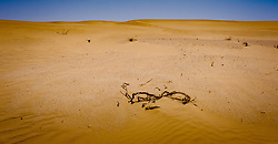 The dry lake bed of Ouid Draa near the Algerian border in the south of Morocco<br /> <br /> (c) Andrew Wilson   Edinburgh Elite media