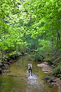 Sugar running the creek in the arboretum