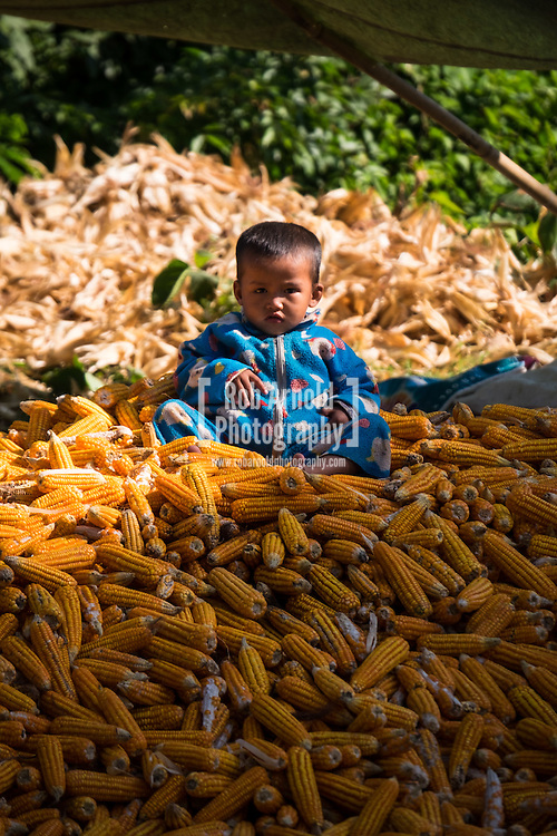 A young child sits on top of a pile of dried corn, which is being prepared for export near the Shan town of Hsipaw in North East Myanmar.