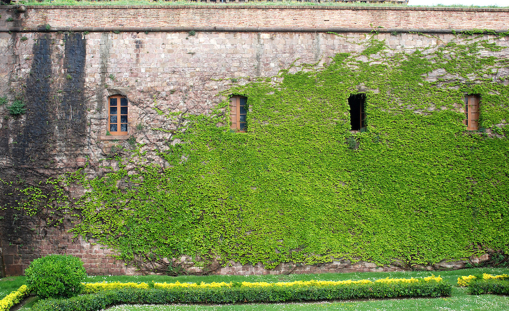 Beautiful growth on the Castle Montjuif in Barcelona, Spain