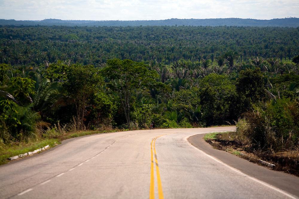 Codo_MA, Brasil...Palmeiras de babacu em Codo...The babacu palm in Codo...Foto: LEO DRUMOND /  NITRO