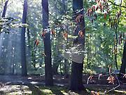 Herfstochtend op Landgoed Clingendael, Den Haag - Autumn morning at Clingendael estate, The Hague, Netherlands.