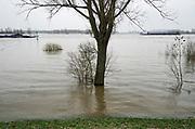 Nederland, Ooij, 20-3-2019Het water van de Waal staat aan de voet van de dijk . Uiterwaarden lopen onderFoto: Flip Franssen