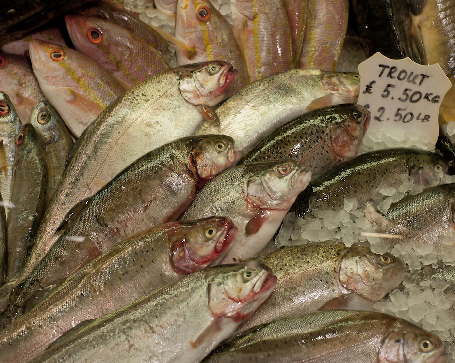 Fish for sale at a market stall