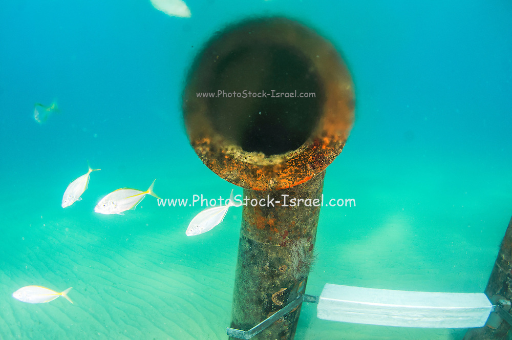 Brine discharge pipe and vent from a desalination plant on the seabed at a distance of 300 meter from the shore. Brine discharge can have a negative impact on the ocean ecosystem. Photographed in Israel Mediterranean sea