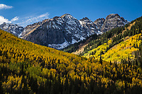 Turning of the aspen trees during the autumn season. Below Yellow Mountain of the San Juan Mountains.  Near Ophir, Colorado.