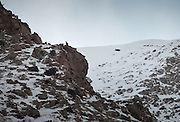 An Ibex on top of a rock - wildlife...Trekking up the Wakhan frozen river, the only way up to reach the high altitude Little Pamir plateau, home of the Afghan Kyrgyz community.