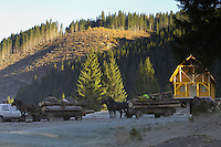 Timber transport, Cheile Bicazului-Hasmas National Park, Carpathians, Transylvania, Romania,