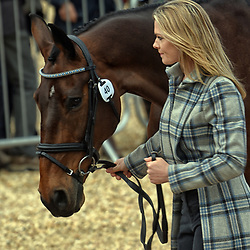 Julia Norman Badminton Horse Trials Gloucester England UK May 2019. Julia Norman equestrian eventing representing Great Britain riding Carryon Bobby Boy at the Badminton Horse trials 2019 Badminton Horse trials 2019 Winner Piggy French wins the title