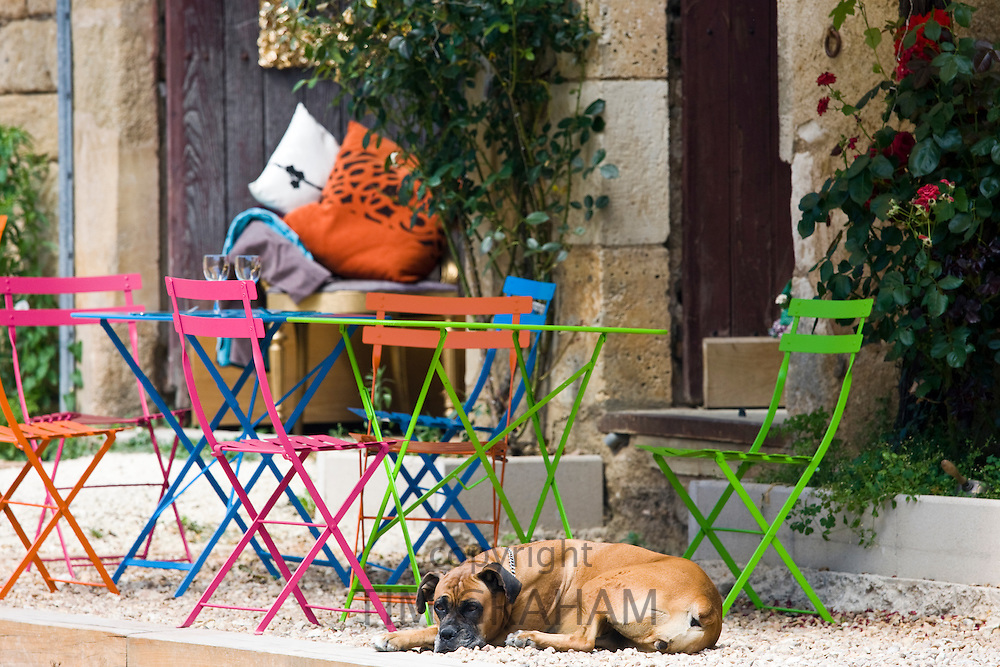 French dog on guard at cafe in historic town of St Jean de Cole, France