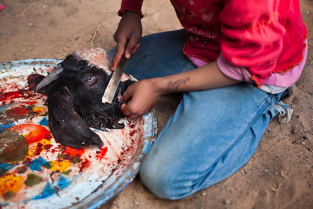 A Bedouin girl carves the hair from the head of a goat slaughtered to make mansaf, a local delicacy of goat roasted in yogurt, at a Bedouin encampment in Wadi Rum, Jordan.