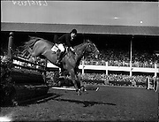 """05/08/1960<br /> 05/08/1960<br /> 05 August 1960<br /> R.D.S Horse Show Dublin (Friday). Aga Khan Trophy. Miss Pat Smythe on """"Flanagan"""", competing for English Team in the Aga Khan Trophy International Jumping Competition at Dublin Horse Show."""