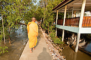 Apr. 3, 2010 - KHUN SAMUTCHINE, THAILAND: Abbot ATHIKARN SOMNUK ATIPANYO, walks back to the monk's quarters at Wat Samutchine. Rising sea levels brought about by global climate change threaten the future of Khun Samutchine, a tiny fishing village about 90 minutes from Bangkok on the Gulf of Siam. The coastline advances inland here by about 20 metres (65 feet) per year causing families to move and threatening the viability of the village. The only structure in the village that hasn't moved, their Buddhist temple, is completely surrounded by water and more than 2 kilometers from the village. The temple and the village have asked the Thai government and several NGOs for help, but the only help so far is a narrow concrete causeway the government is building that will allow people to walk into the temple from a boat landing two miles away. The walk to the village from a closer boat landing is shorter, but over an unimproved mud flat that is nearly impassible in the rainy season.  PHOTO BY JACK KURTZ