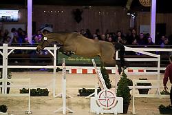 076 - Classic Gentleman Z <br /> Hengsten keuring BWP - Koningshooikt 2017<br /> © Dirk Caremans<br /> 27/12/2016