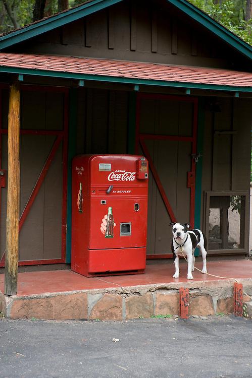 Sedona Woods Dog