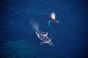 Humpback whales, mother and calf, Hawaii