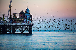 © Licensed to London News Pictures. 18/01/2017. Brighton, UK. Starlings murmuring at sunset over the Brighton Palace Pier. Photo credit: Hugo Michiels/LNP