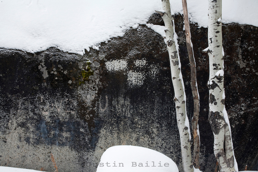 Snow covered aspens and rock.
