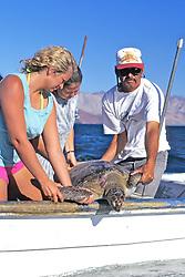 Releasing Black Sea Turtle
