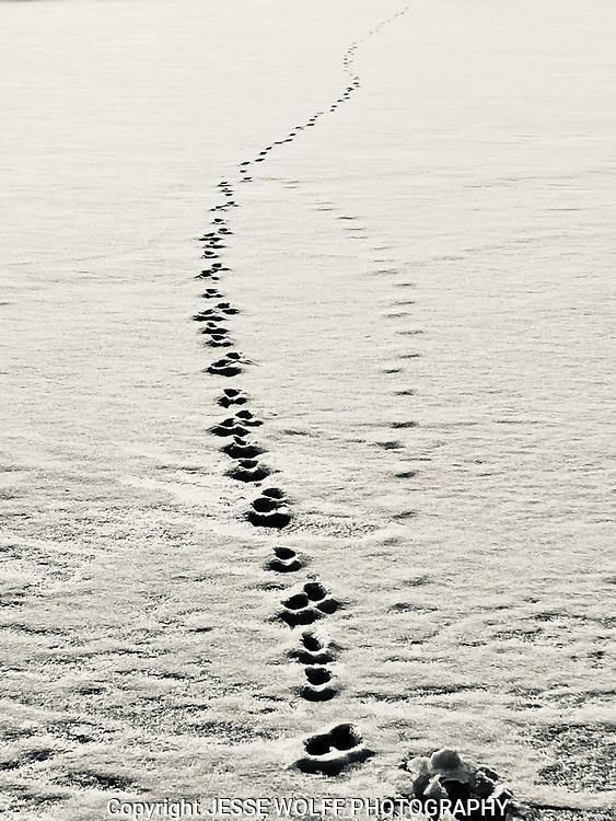 Frozen ice Lake Arbutus, MI
