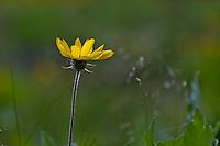 ©2011, Sean Phillips.http://www.RiverwoodPhotography.com