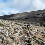 A group of climbers set off on the trail from Moir Hut Camp to Lava Tower on Mt Kilimanjaro's Lemosho Route. In the distance you can see the tents and porters packing up the campsite.