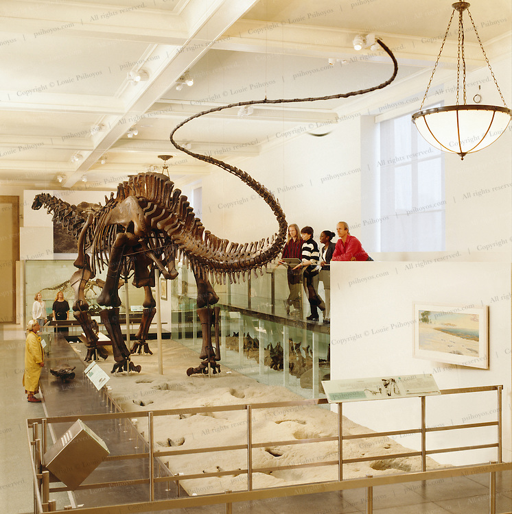 The Brontosaurus at the American Museum of Natural History rests on a real trackway from Texas.