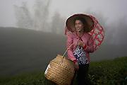 Portrait of Ahn in the Bagua tea farm - Jhushan, Taiwan.