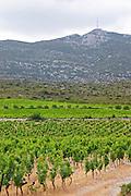 Domaine des Grecaux in St Jean de Fos. Montpeyroux. Languedoc. France. Europe. Vineyard. Mountains in the background. Mont Saint Baudille.