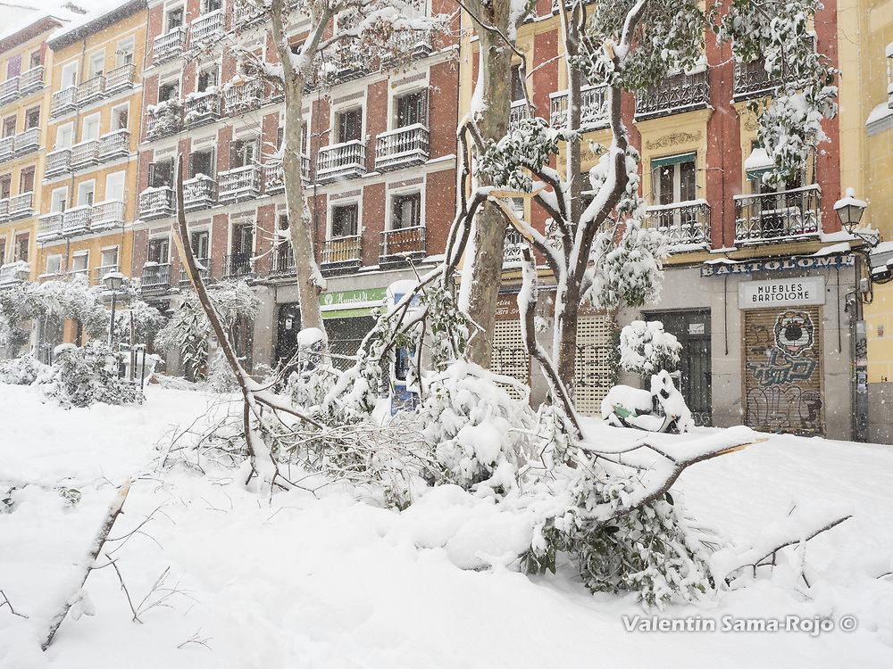 Madrid, Spain. 9 th January, 2021. Branches of trees of Cascorro square were broken due the weight of the snow fallen during the night. Storm Filomena hits Madrid (Spain), a weather alert was issued for cold temperatures and heavy snow storms across Spain; according to the weather agency Aemet is expected to be one of the snowiest days in recent years. © Valentin Sama-Rojo.