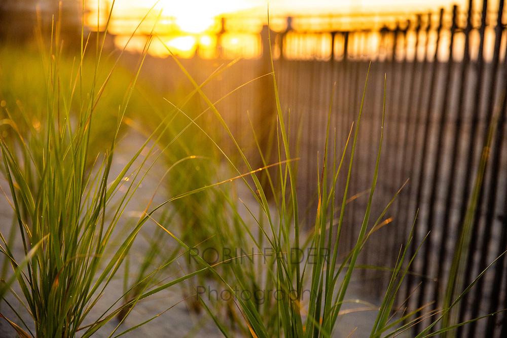 Jersey Shore dunes at sunrise.