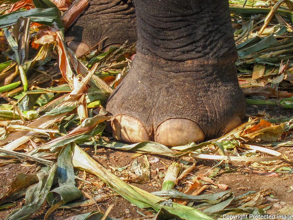 Elephant Toes by Koi
