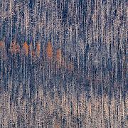 Aftermath from Skyland Fire, montana