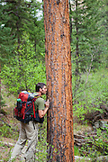 Obadiah Reid stops to smell the fragrant bark of a ponderosa pine (Pinus ponderosa) on the Goose Creek Trail, Lost Creek Wilderness, Colorado.